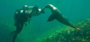 Oceans documentary scene with seal
