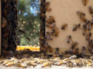 Vanishing of the Bees movie scene