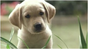 Quill: The Life of a Guide Dog movie scene