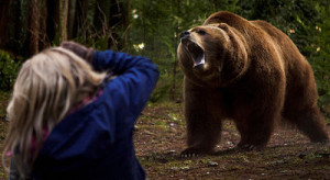 Bart the Bear roars Into the Grizzly Maze